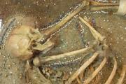 بانوی پادشاه با زیور آلات کشف شده در شهر باستانی سرزم